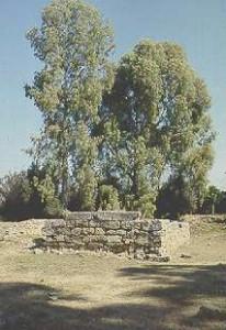 ArtemisOrthia1